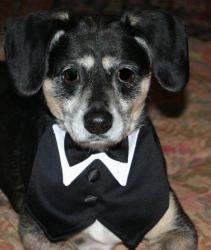 Adopt Noah On Adoptable Beagle Beagle Dog Cute Animal Pictures