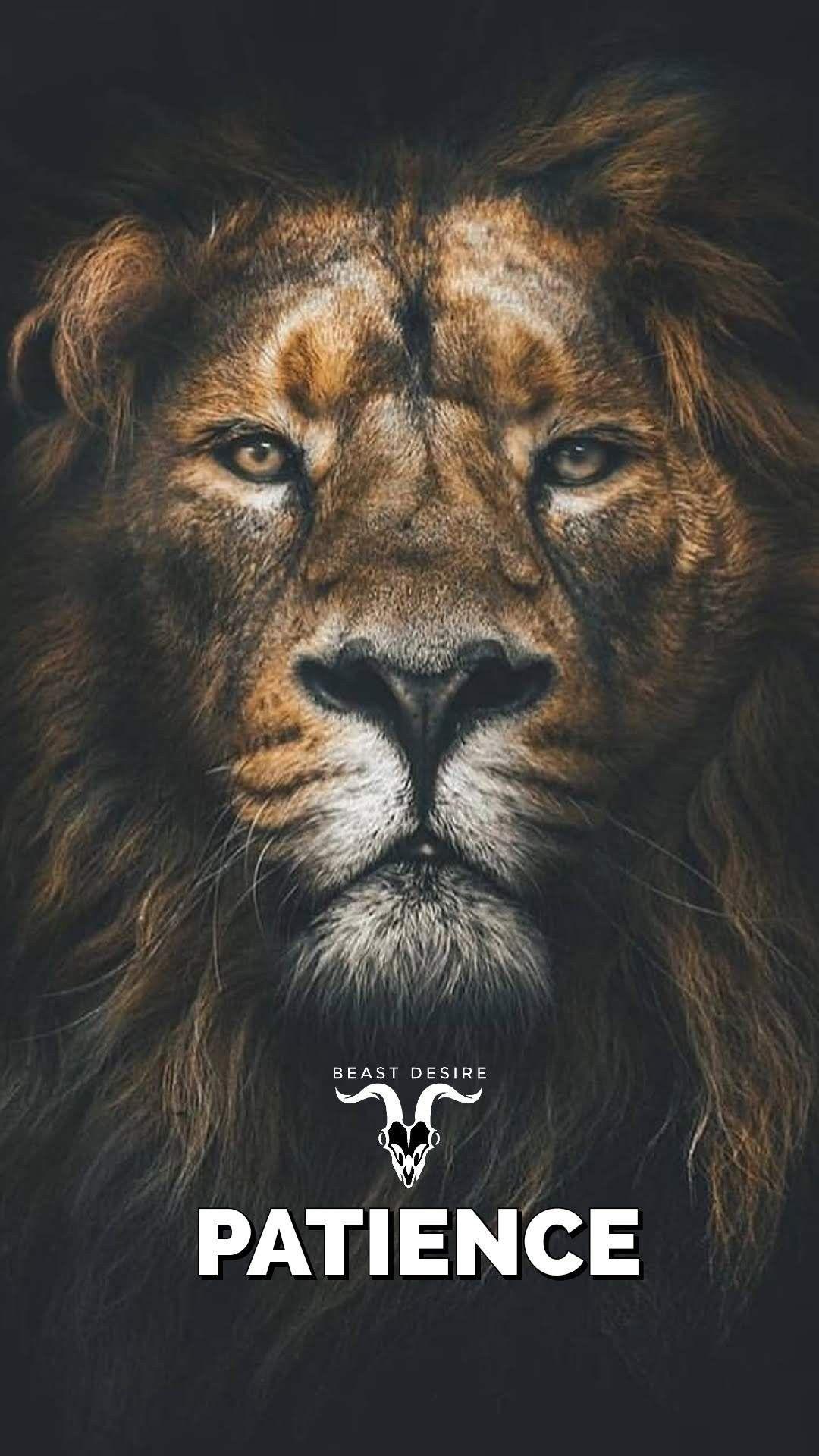 Lion Quotes Wallpaper Hd