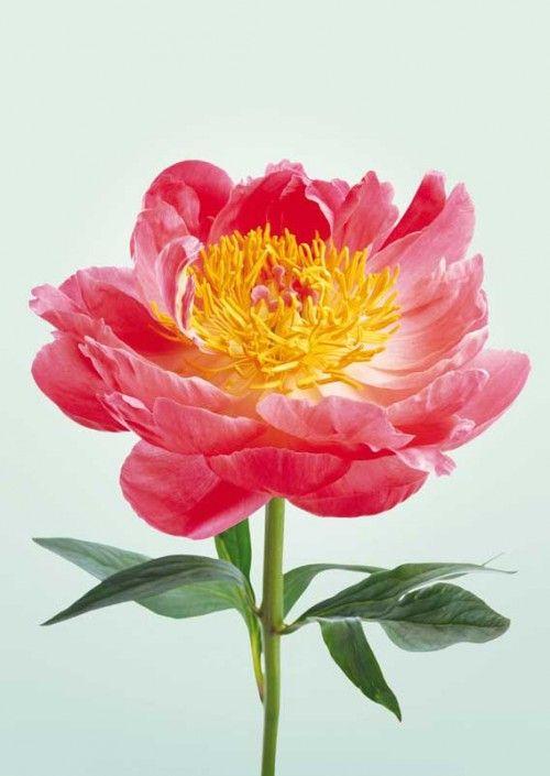 SASHA KURMAZ FLOWER 1