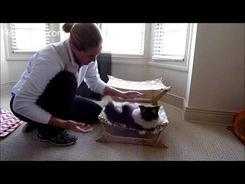 How Ragdoll Cats Fit on the Peach Industries Cat Hammocks