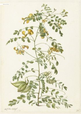 "Flower Bomb Rijksmuseum by Fine Art | metal posters - Displate #flower explore Pinterest"">… | Displate thumbnail"