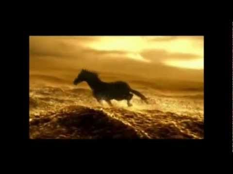 """A Cry For Freedom"" - Wild Horses"