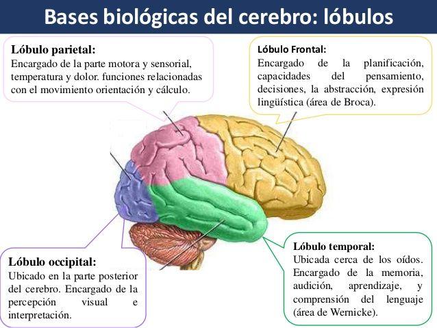 Bases Biológicas Del Aprendizaje Aprendizaje Caratulas Para Secundaria Biologico