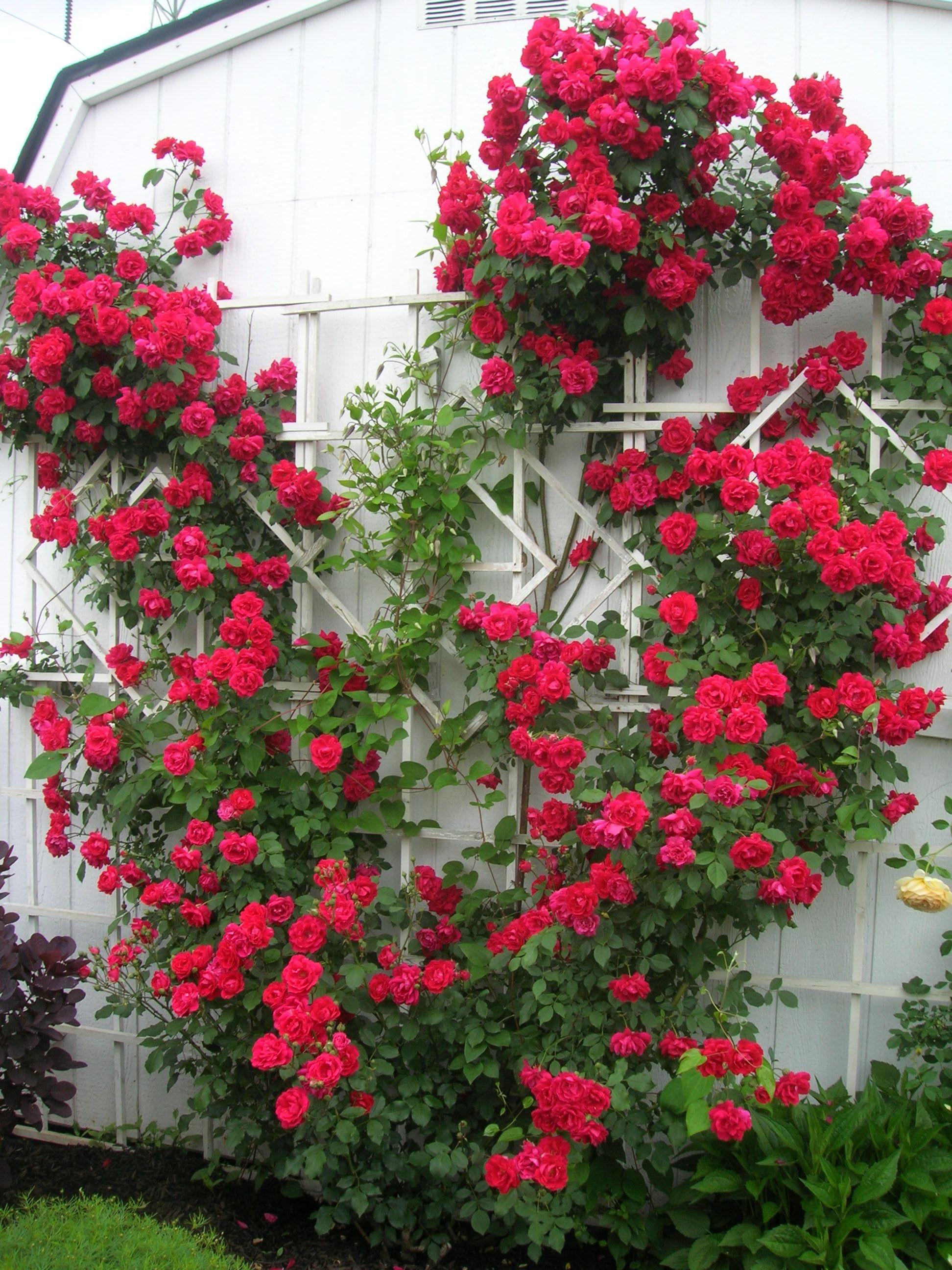 Backyard rose garden - Beautiful Small Garden Design Ideas