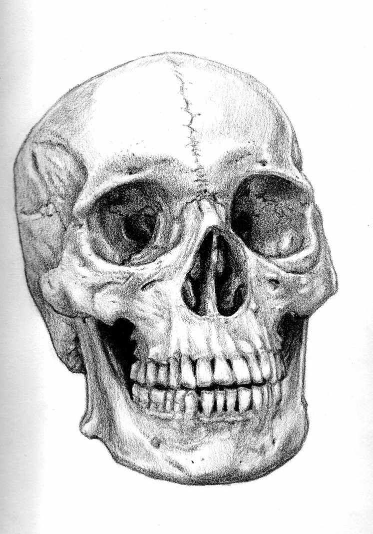 потребитель картинки черепа со всех сторон после татуажа возникает