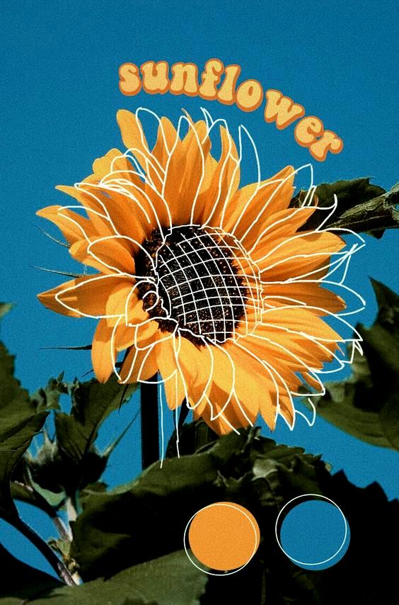Sonnenblume ästhetisch gelb blau Natur zeichnen PicsArt instagram @zoledits