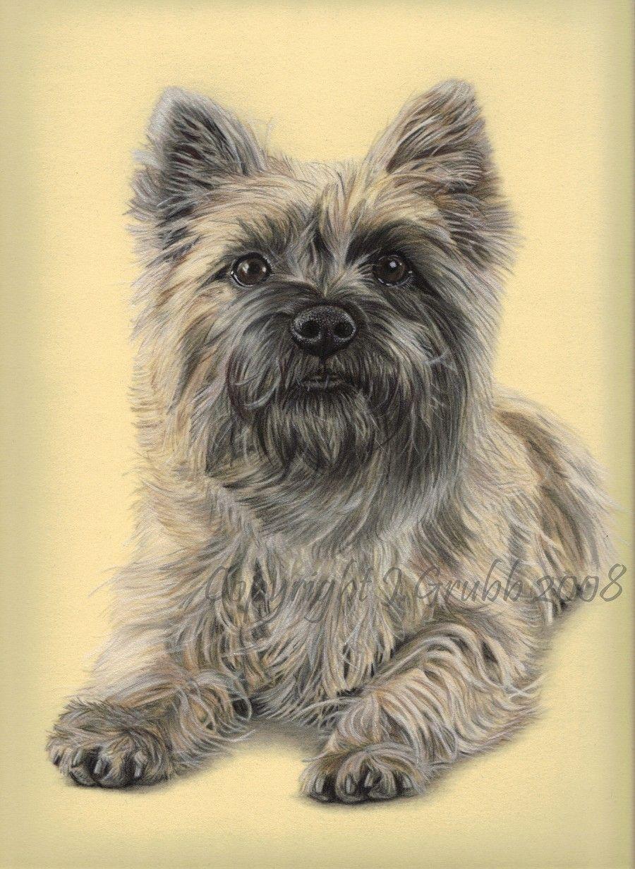Pastel Pet Portraits Cairn Terrier Dog Portraits Cairn Terrier