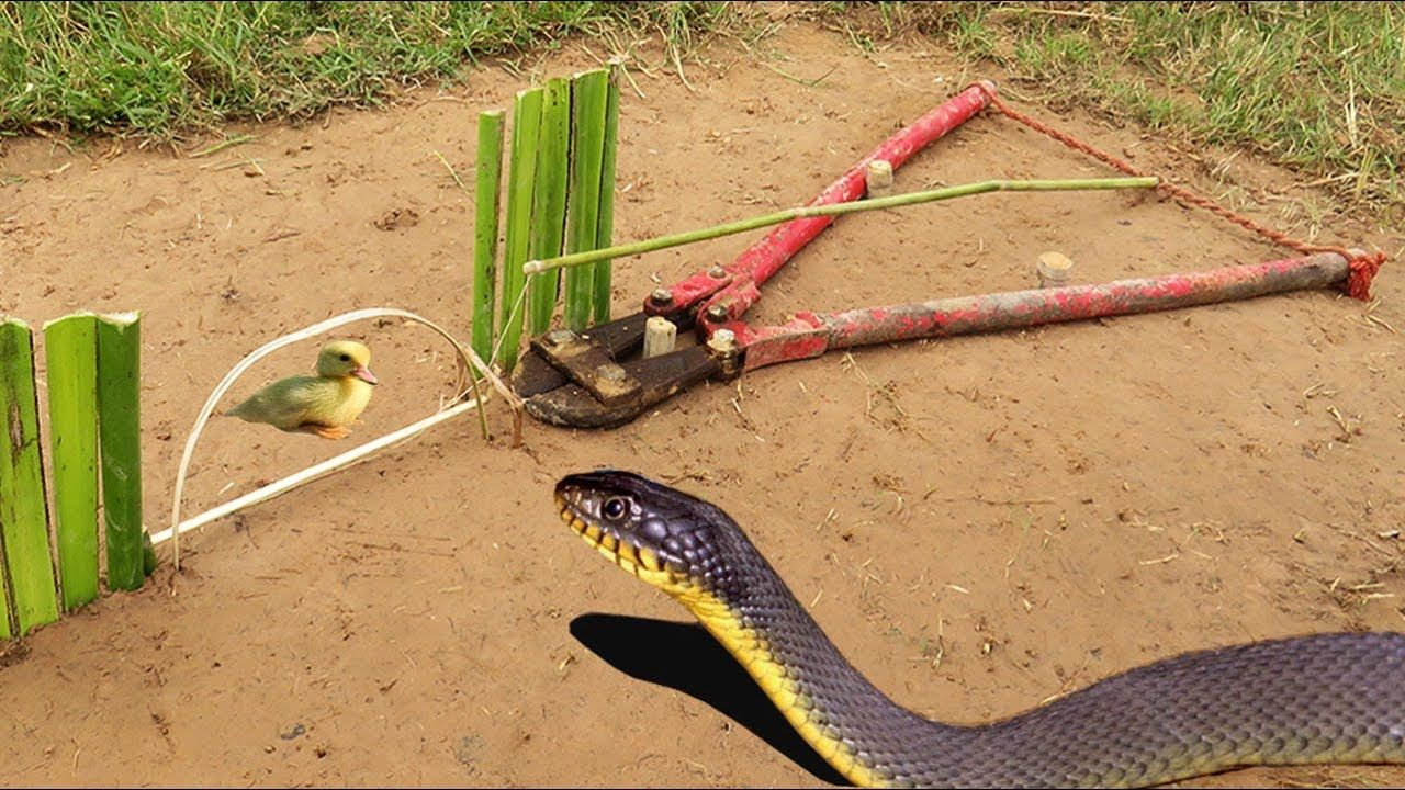 Easy snake trap simple diy creative snake trap make from