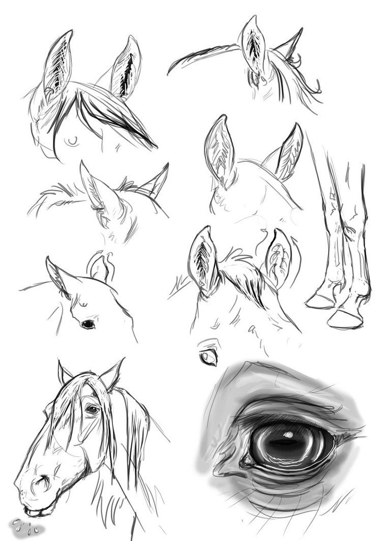 Let's Draw MLP - Rarity by ArdonSword on DeviantArt |Mlp Ears Drawings