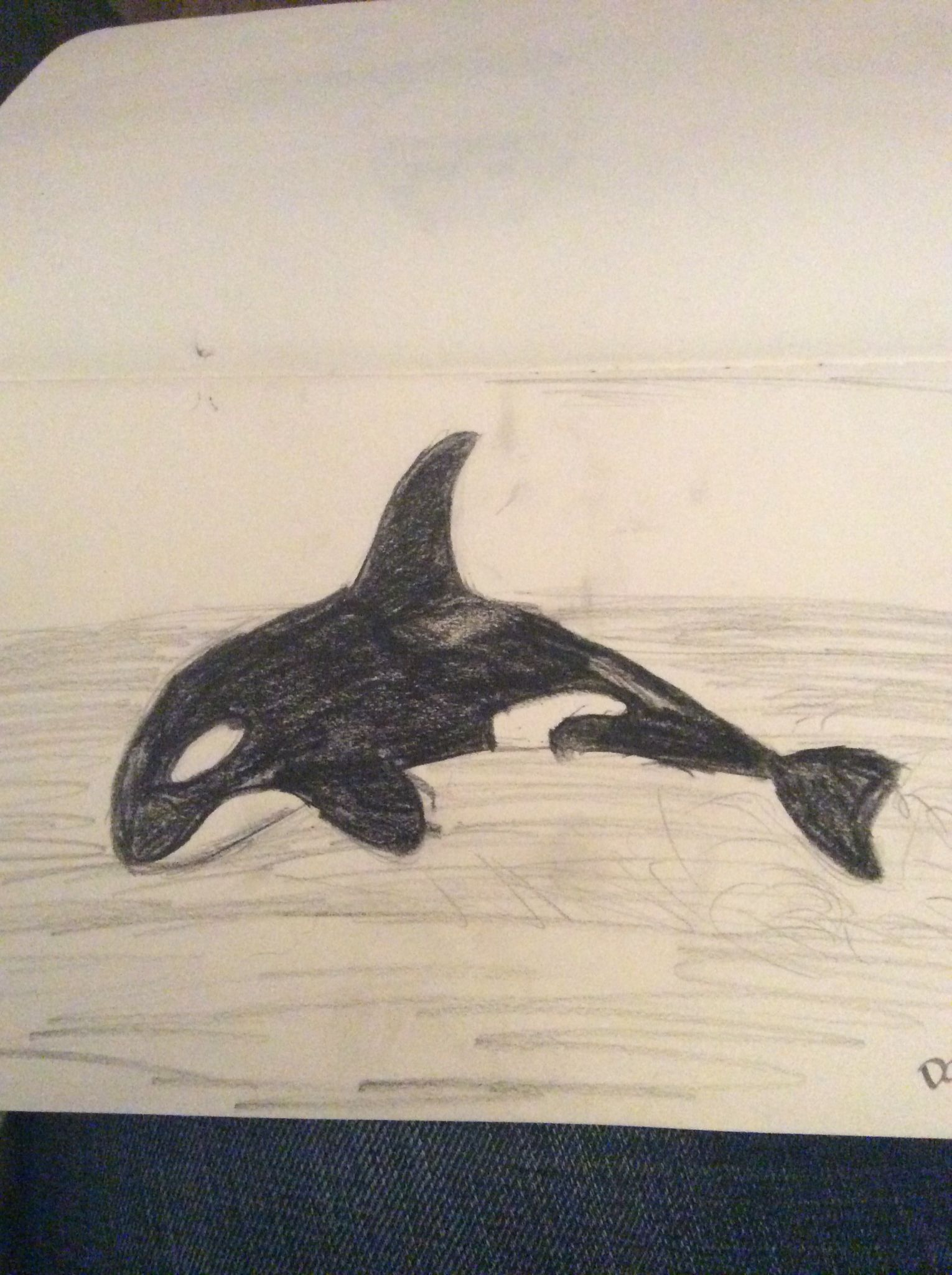 Day 70 a killer whale orca marine mammal pencil drawing