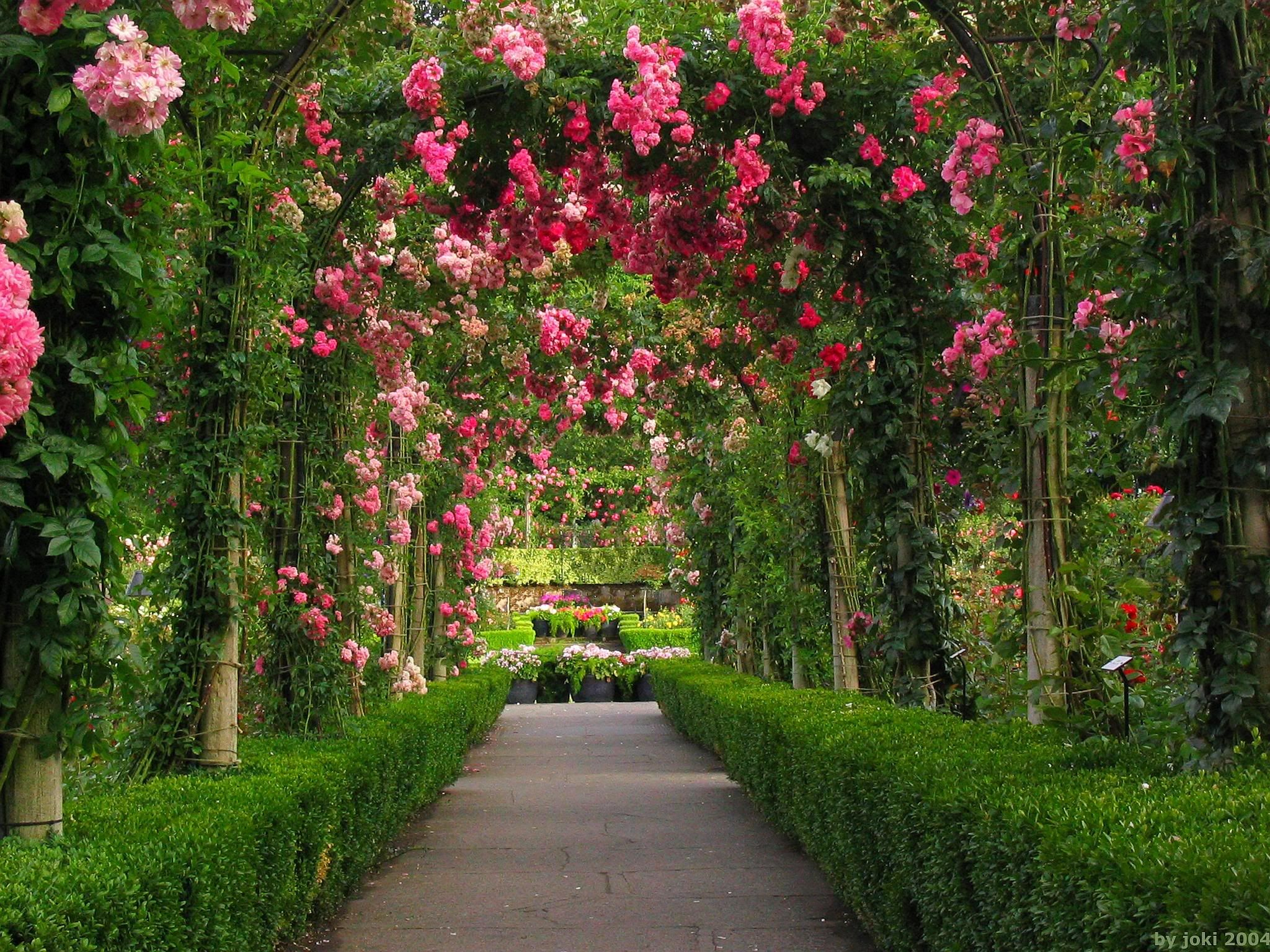 Beautiful rose garden photos