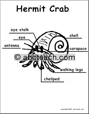 animal diagrams  hermit crab  labeled and unlabeled