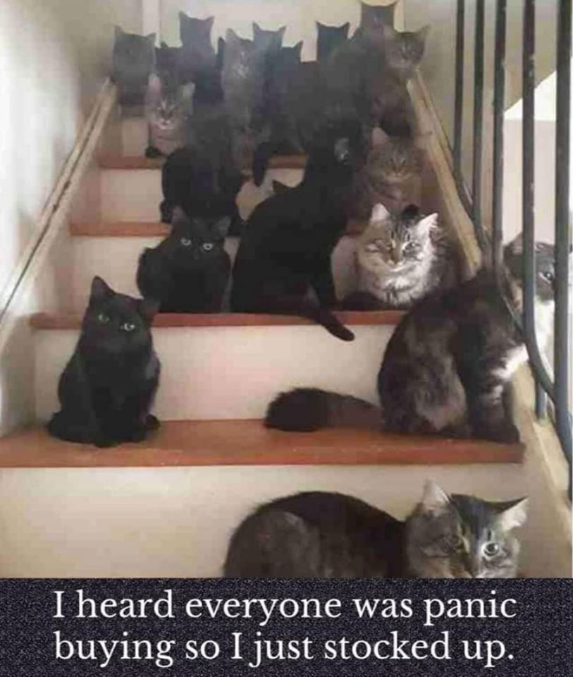 Pin By Sharon Gayle On Sam In 2020 With Images Funny Cat Memes