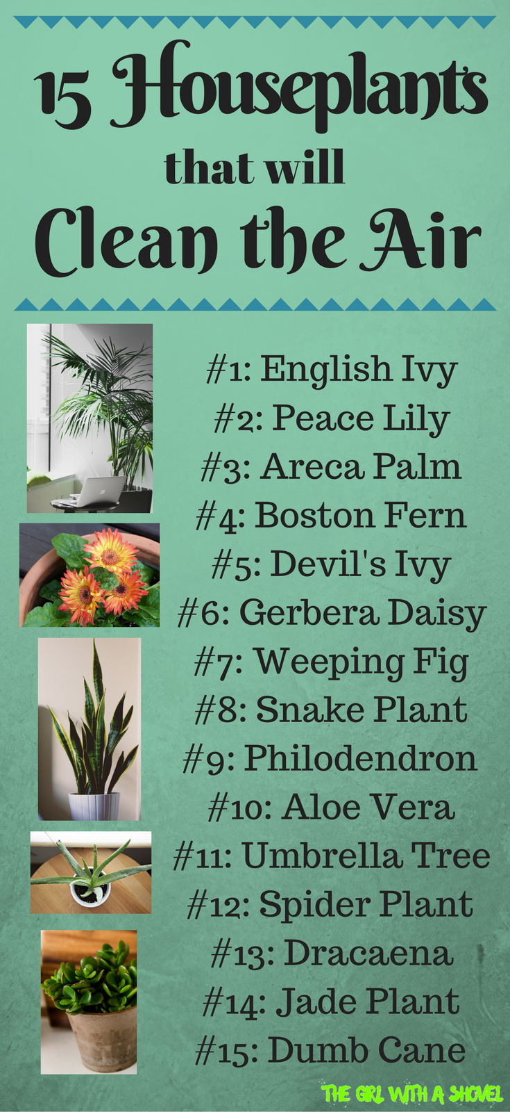15 Interior Plants That Clean The Air Interior Plants Houseplants