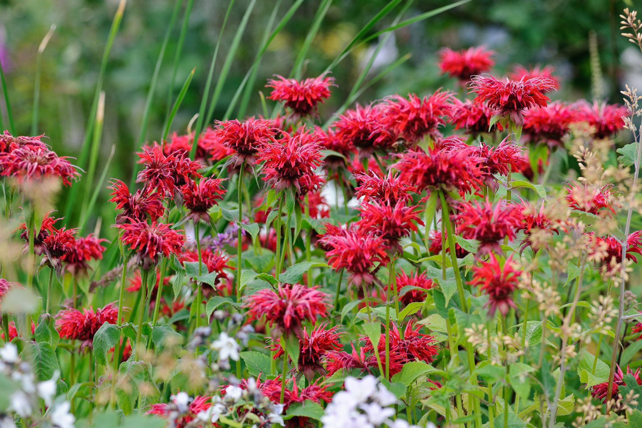 Flower Seeds To Sow In April Flower Seeds Perennials And Flower