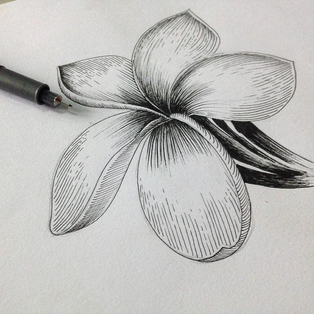 Flower Dibujo: Flor Sacuanjoche #collagecr #hechoporunatica #ink #drawing