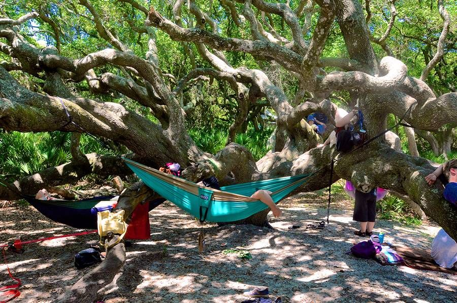 Cumberland Island 10 Don T Miss Activities For This Undeveloped Southern Paradise
