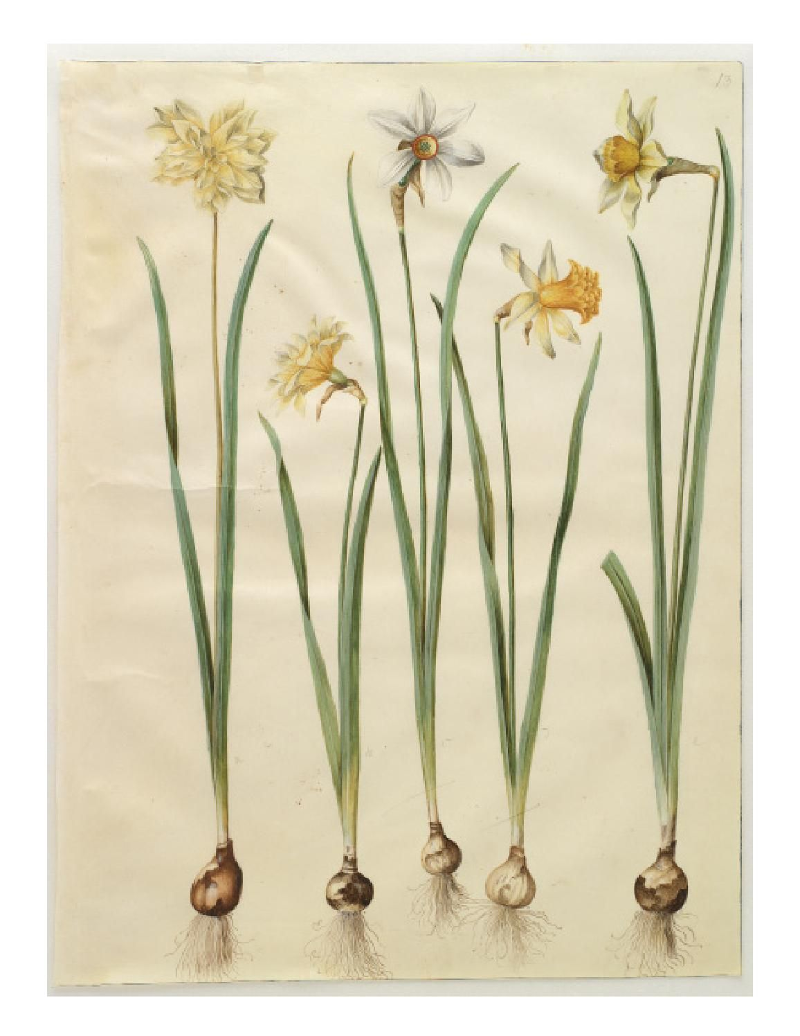 Gottorfer Codex Botanical drawings, Botanical