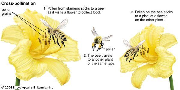 What Is Pollination Critical Moment Of Flower Life Charismatic Planet Pollination Insect Pollinators Bee