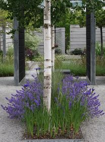 Fantastic combo: lavender, birch and stone.