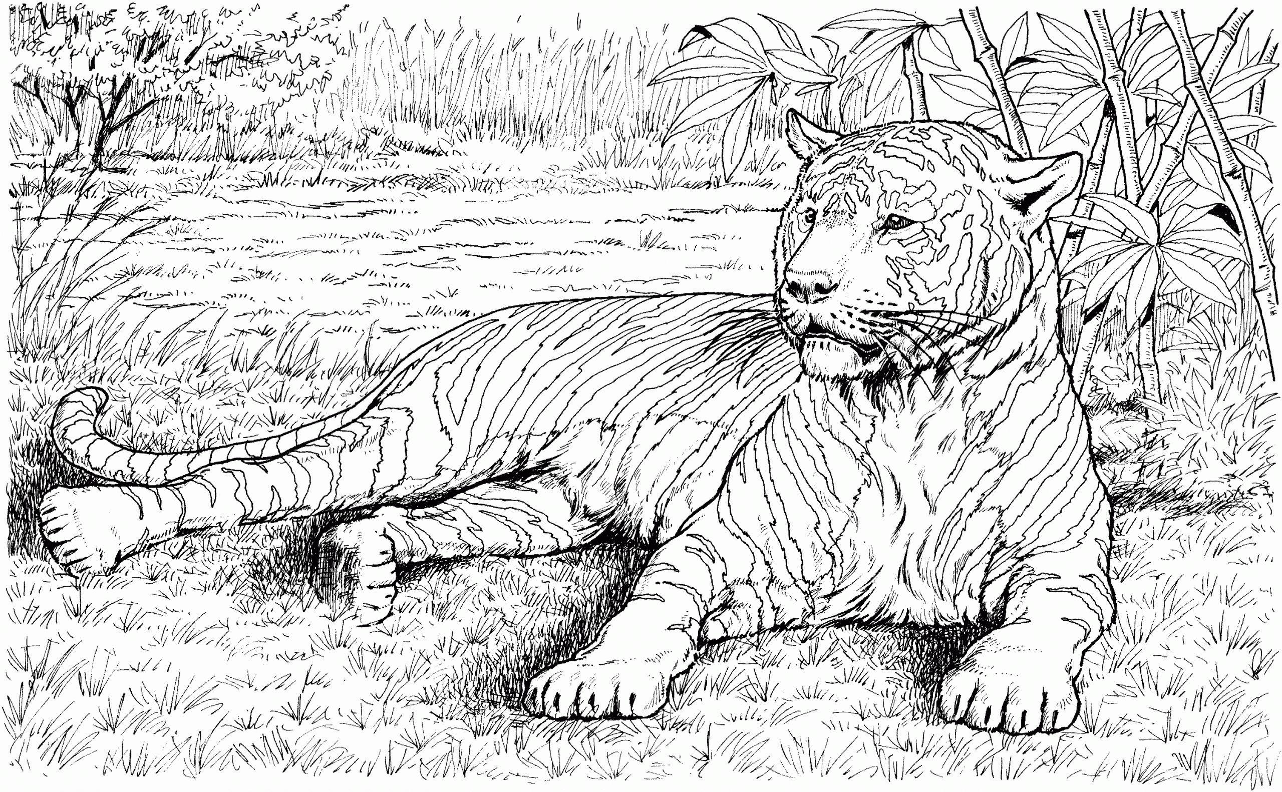 Realistic Animal Coloring Pages Nel 2021 Disegnare Animali Animali Pirografia