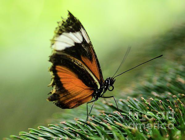 Butterfly Macro 2 by Nick Boren