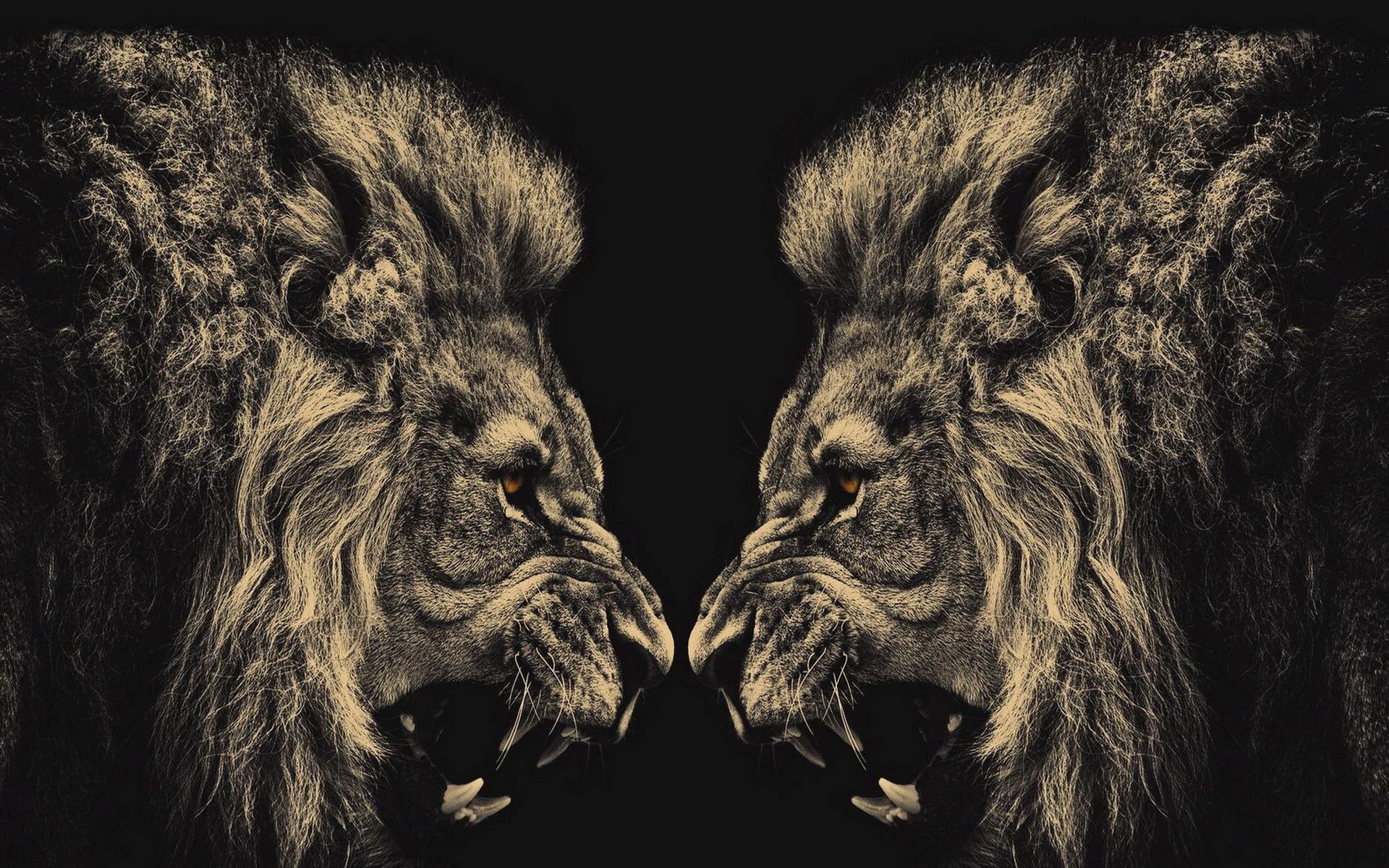 Lion HD Wallpaper for download