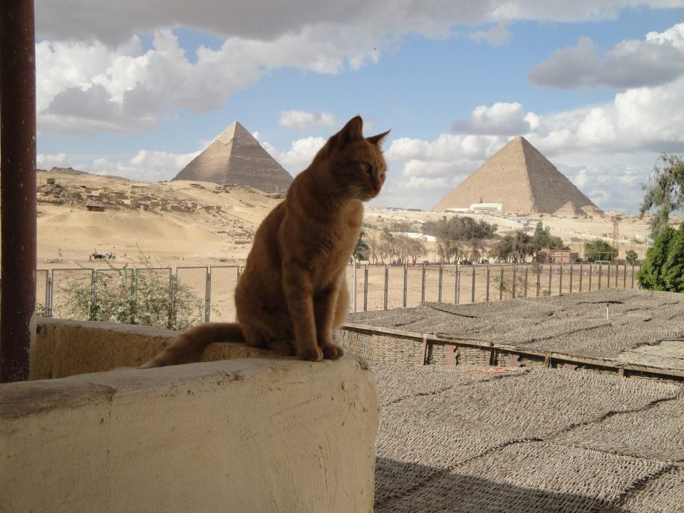 Cat In Egypt So Cool Egypt Cat Egyptian Cats Cats