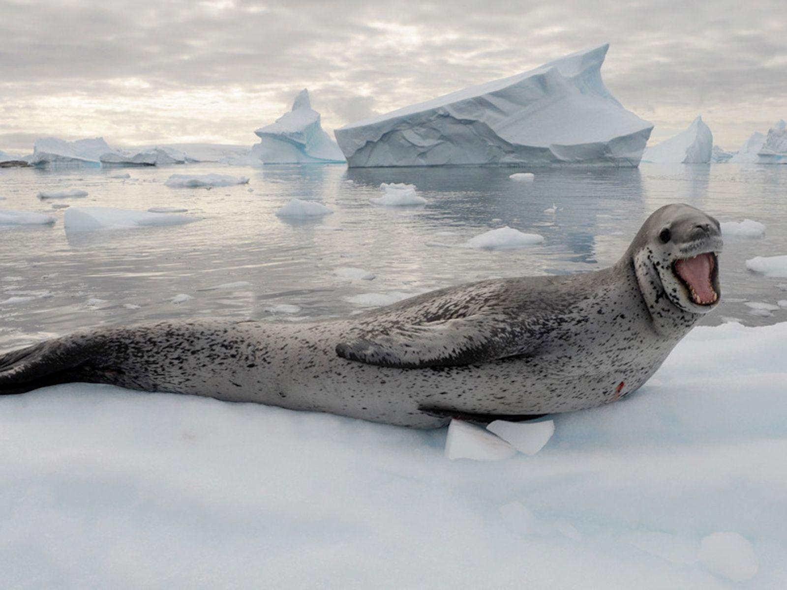 Hommage en photos au monde marin | Water/Sea Life ...