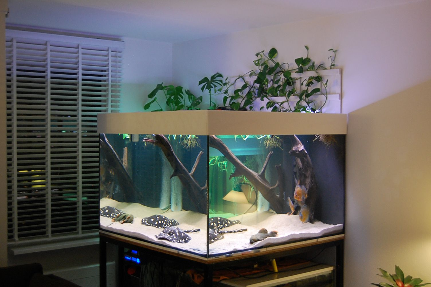 Next tank i have has to be big enough for teacup stingrays for Stingray fish tank
