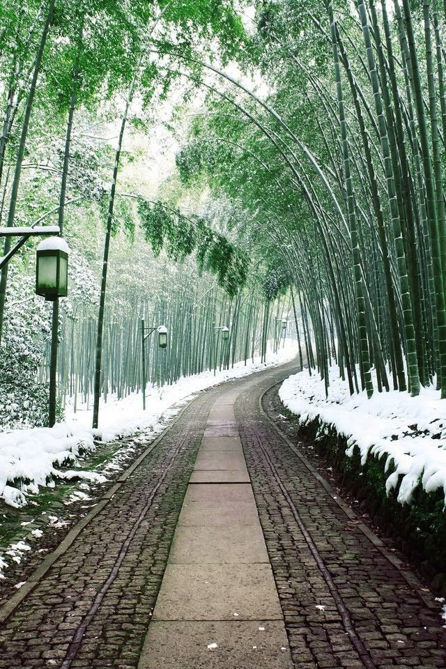 Bamboo path in winter, Japan