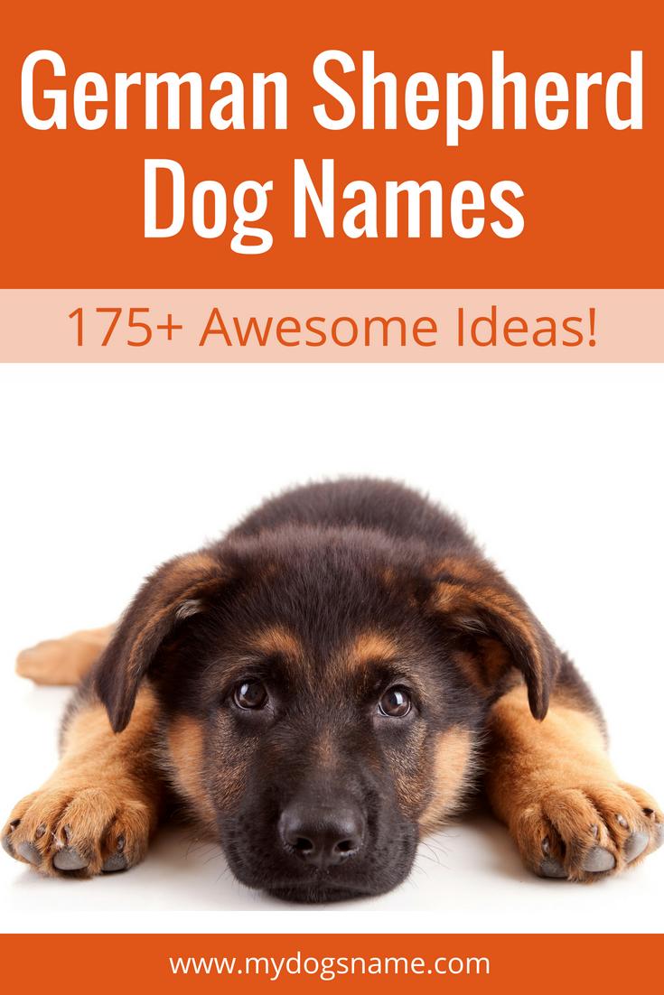 German Shepherd Names The Ultimate List 175 Awesome Names German Shepherd Names German Shepherd Dogs Dog Names
