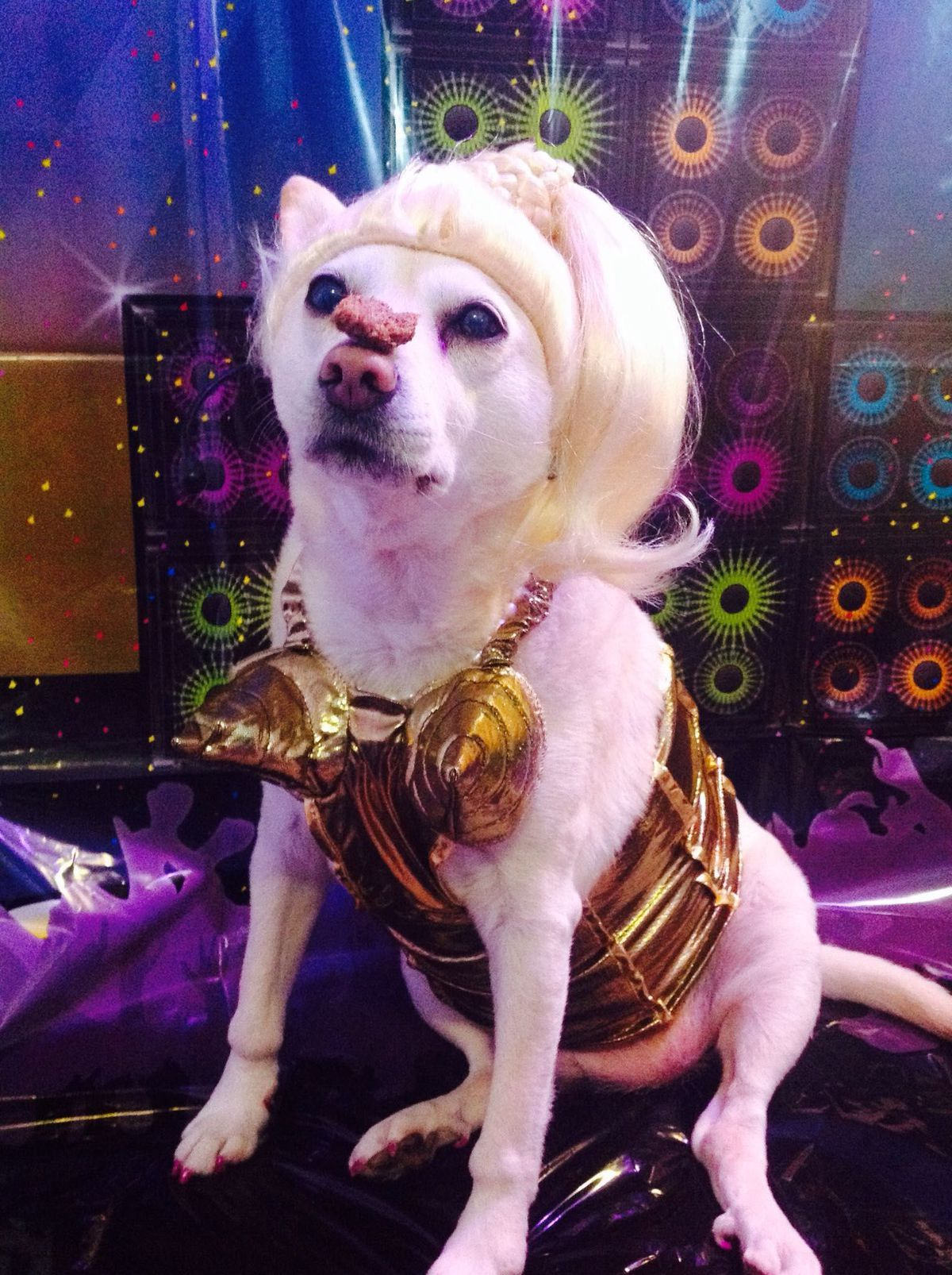 Dog Dressed As Madonna Will Totally Win The Costume Contest Puppy Costume Dogs Costume Contest