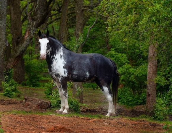 Just Beautiful Found Him On Craigslist For Sale Just Don T Have The Land Yet Animals Horses Beautiful