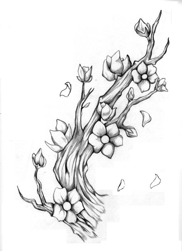 Cherry Blossom Branch by ~MalignantImpression on deviantART ...