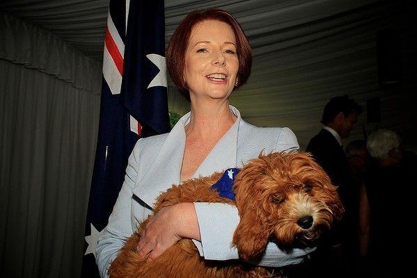 Prime Minister Julia Gillard with her pet cavoodle Reuben