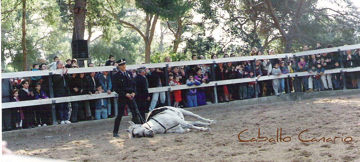 caballo tumbado