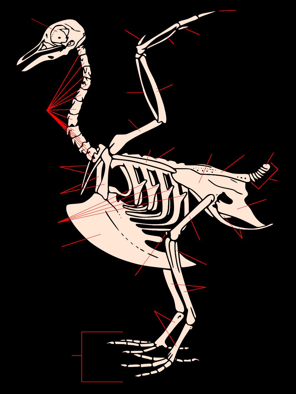 Turkey Bone Diagram - Example Electrical Circuit •