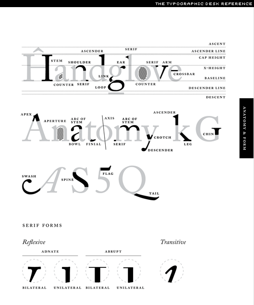 the anatomy of a letterform | Design | Pinterest | Anatomy ...