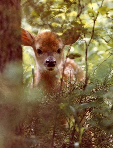 Fawn  -This is precious <3