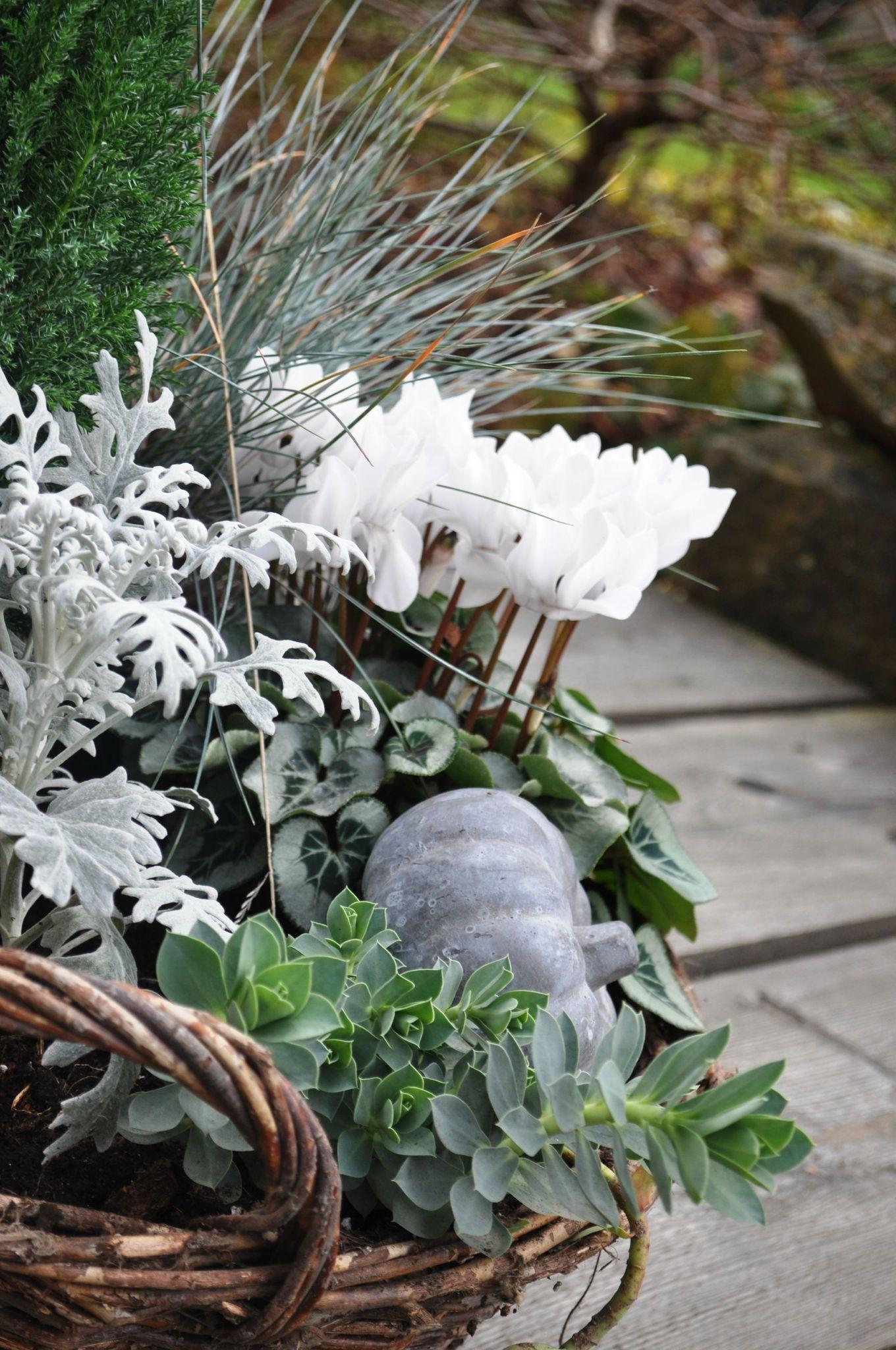 Jardiniere automne ton blanc pourpre recherche google for Jardiniere exterieur hiver