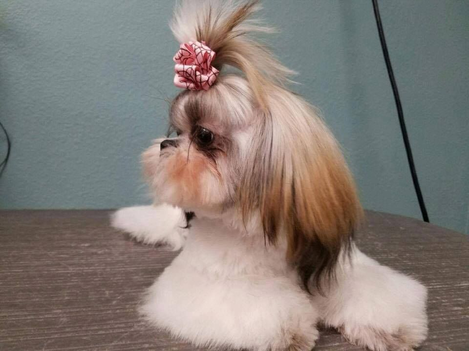 Schedule an appointment to get your pets updo done today 406 969 schedule an appointment to get your pets updo done today find this pin and more on pet grooming billings mt solutioingenieria Images