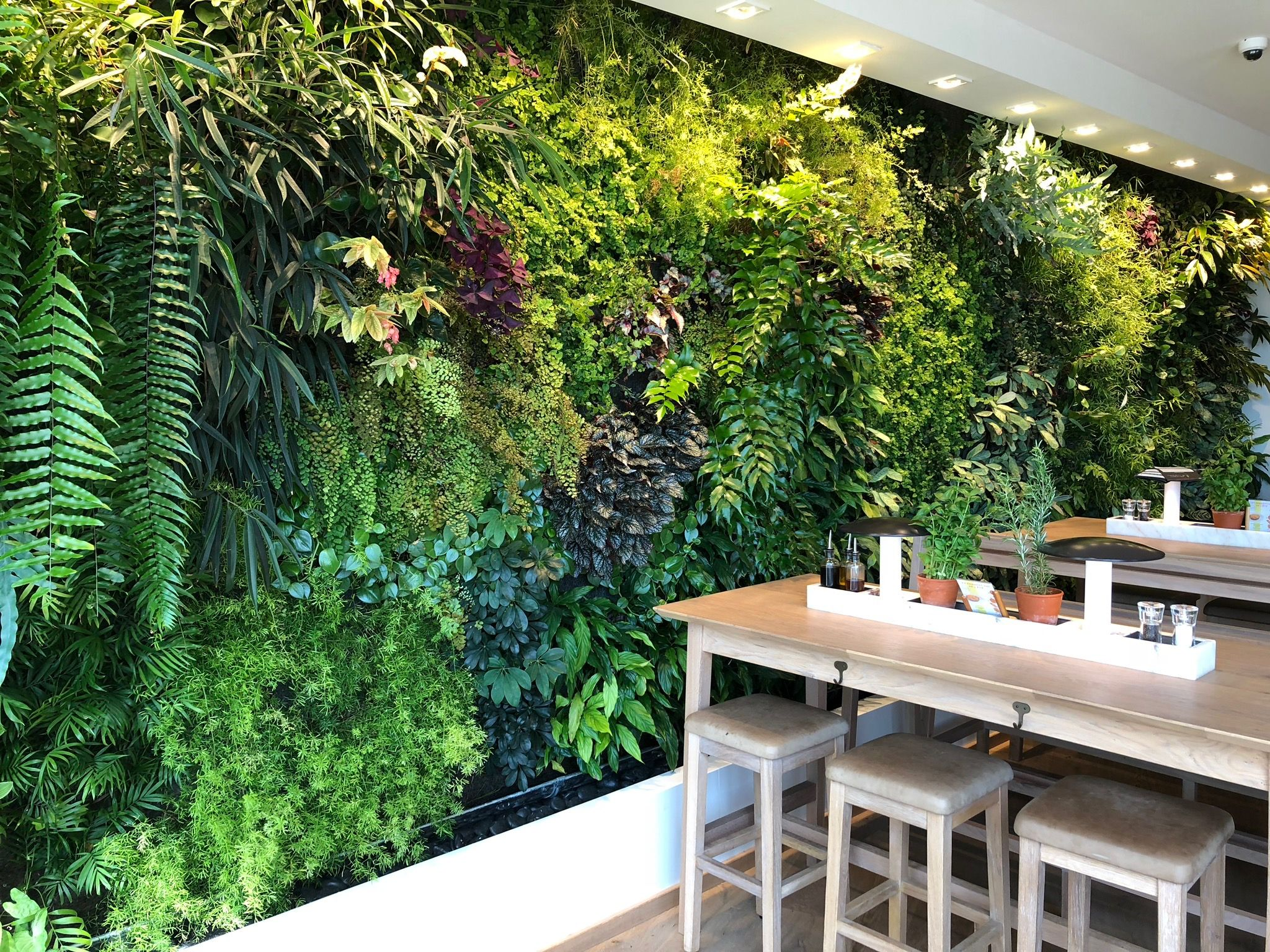 Mur Végétal Extérieur Palette urban jungle, restaurant, décoration, mur végétal, plantes