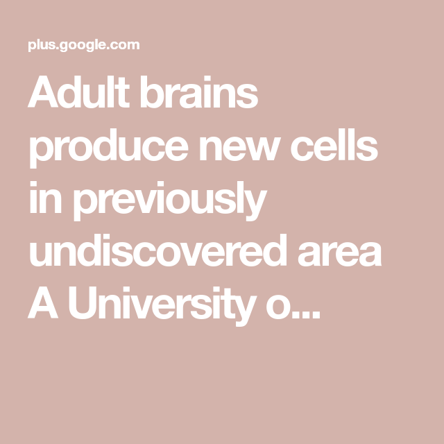 Adult brains produce new cells in previously undiscovered area A University o...