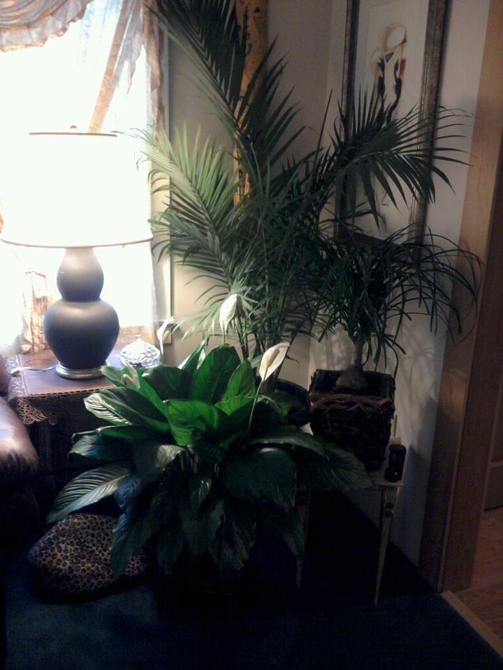 love my plants...