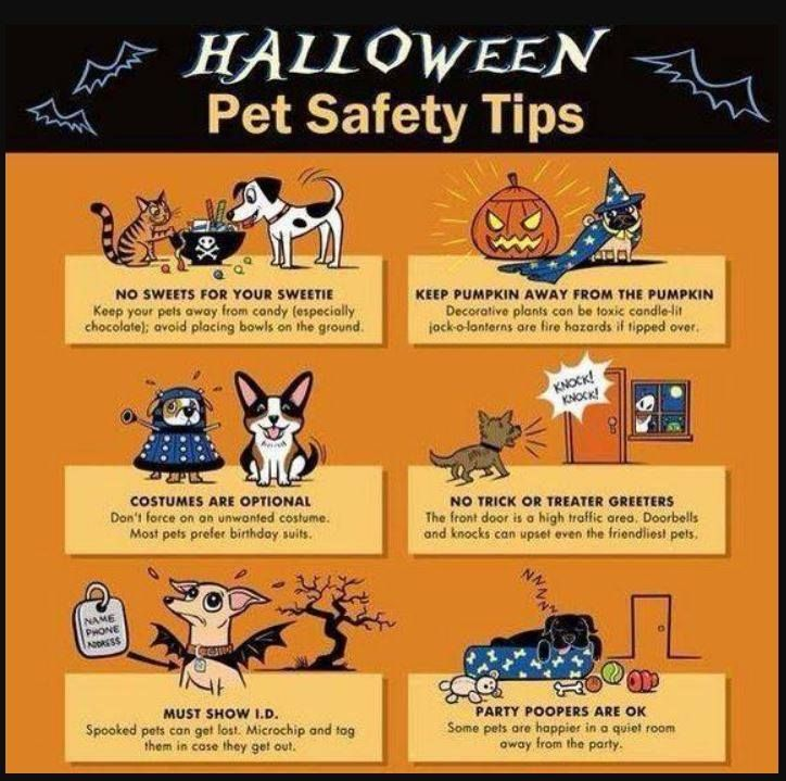 Pin by Stow Falls Pet Clinic, Inc. on DOGS (With images