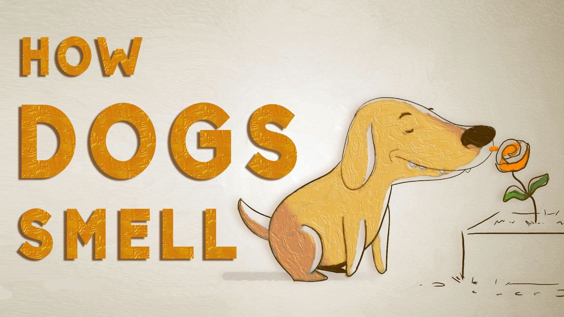 How Do Dogs See With Their Noses An Animated Explanation Of A