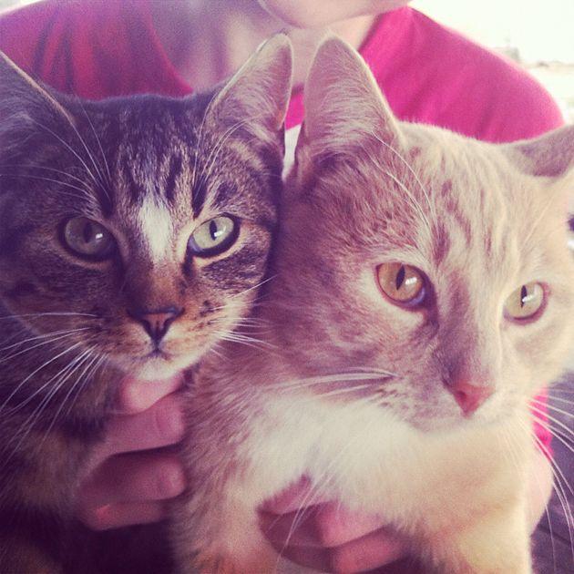 kittens1