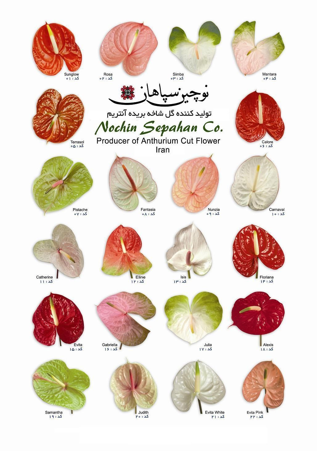Anthurium I Will Have To Wait If Until My Anthurium Blooms Before I Know Which Red One It Is Anthurium Flower Anthurium Wedding Flowers Roses