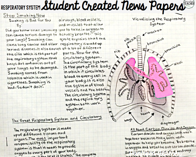 students researched the respiratory system and then wrote, Muscles